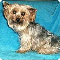 Adopt A Pet :: Peaches - Mooy, AL