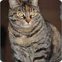 Adopt A Pet :: Katie - Modesto, CA