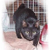 Adopt A Pet :: Mystery - Montgomery, IL