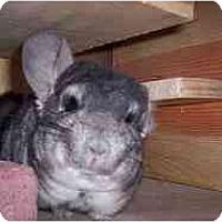 Adopt A Pet :: Peek - Avondale, LA