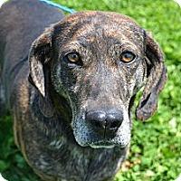 Adopt A Pet :: Hazel - Russellville, KY