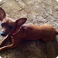 Adopt A Pet :: Lexi - Houston, TX