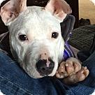 Adopt A Pet :: COTTON