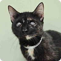 Adopt A Pet :: Camembert - New York, NY