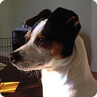 Adopt A Pet :: Cayce - Nashville, TN