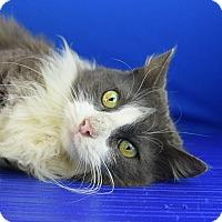 Adopt A Pet :: Madame Blue - Carencro, LA