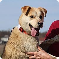 Adopt A Pet :: Kipper - Elyria, OH