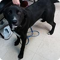 Adopt A Pet :: Max - Avon, NY