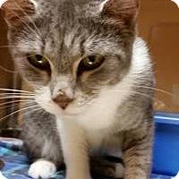 Adopt A Pet :: Rain - Worcester, MA