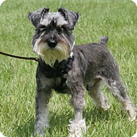 Adopt A Pet :: Micky - North Fort Myers, FL