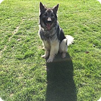 Adopt A Pet :: Hank - Boise, ID