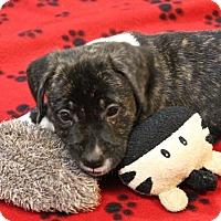 Adopt A Pet :: Dino - Winters, CA