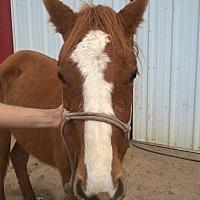 Adopt A Pet :: Lorraine - Hitchcock, TX