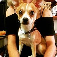 Adopt A Pet :: Coyette - Destrehan, LA