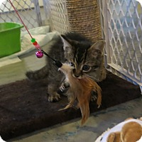 Adopt A Pet :: Elwood Blues - Geneseo, IL