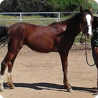 Adopt A Pet :: Dixie - Newcastle, CA