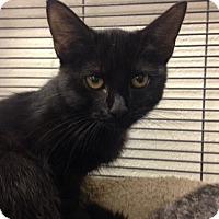 Adopt A Pet :: Mimosa - Sarasota, FL