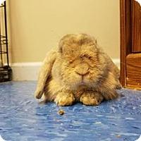 Adopt A Pet :: Red - Queenstown, MD