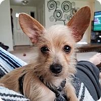 Adopt A Pet :: Norbert - Grants Pass, OR