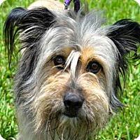 Adopt A Pet :: CHEWY - West Palm Beach, FL