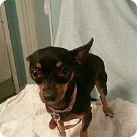 Adopt A Pet :: Squeaker: Courtesy Post - Verona, NJ