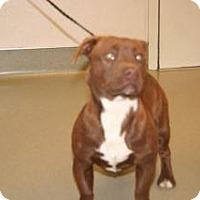 Adopt A Pet :: Flynn - Wildomar, CA