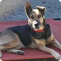 German Shepherd Dog Dog for adoption in Hollister, California - Lilac