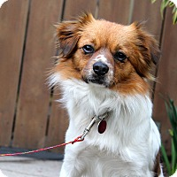 Adopt A Pet :: Oso - Los Angeles, CA