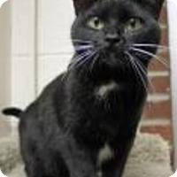 Adopt A Pet :: Maxine - Euclid, OH