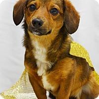 Adopt A Pet :: Scrappy - Rosalia, KS