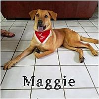 Adopt A Pet :: Maggie - Brownsville, TX