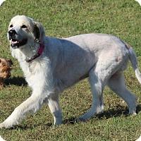 Adopt A Pet :: Sally Sue - Kyle, TX