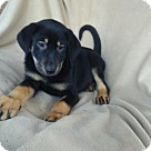 Adopt A Pet :: Kristen pending adoption