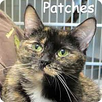 Adopt A Pet :: Patches - Warren, PA