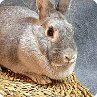 Adopt A Pet :: Petal - Newport, DE