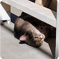 Adopt A Pet :: Tiger - Palmdale, CA
