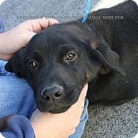 Adopt A Pet :: missy - Nanuet, NY