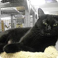 Adopt A Pet :: Ellie - Mission, BC