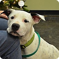 Adopt A Pet :: Mica - Norman, OK