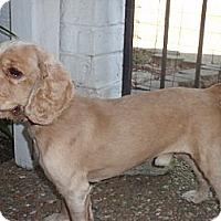 Adopt A Pet :: Kenny - Sugarland, TX