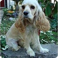 Adopt A Pet :: Penny - Sugarland, TX