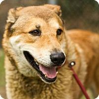 Adopt A Pet :: Simba - Burbank, CA
