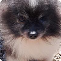 Adopt A Pet :: Cameron - Prole, IA