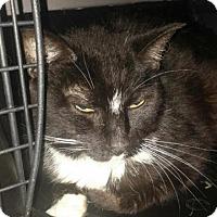 Adopt A Pet :: Spot - Fairborn, OH