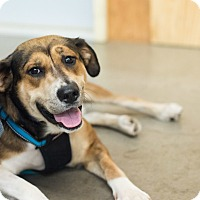 Adopt A Pet :: Trudi - Minneapolis, MN