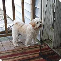 Adopt A Pet :: Magnolia - conroe, TX
