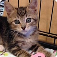Adopt A Pet :: Toots - San Ramon, CA