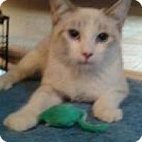 Adopt A Pet :: Akira - Mission Viejo, CA