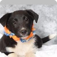 Adopt A Pet :: Hunter - Pittsboro, NC