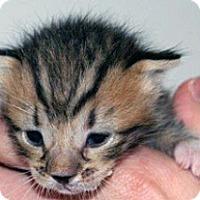 Adopt A Pet :: 292386 - Wildomar, CA